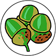 Green_acorn_logo-July_2008